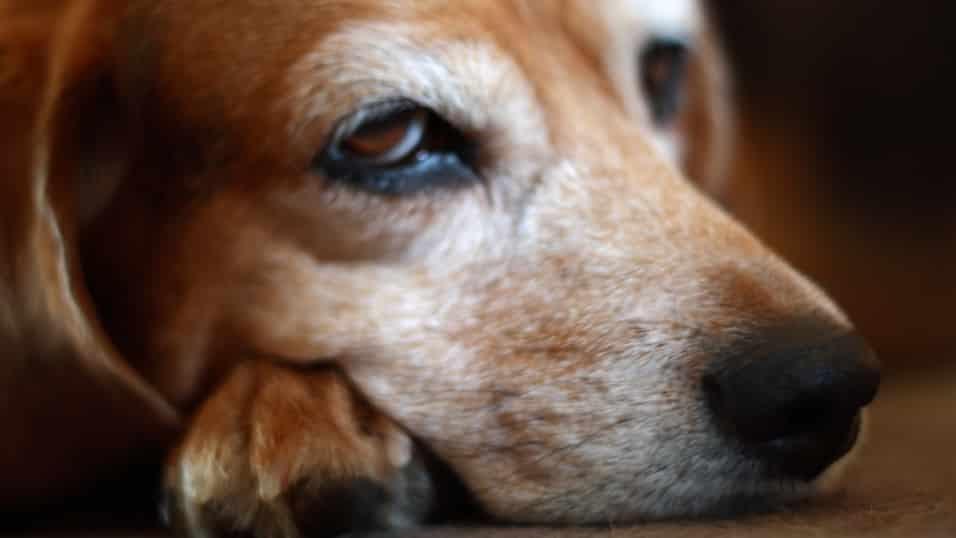 Close up shot of a dog