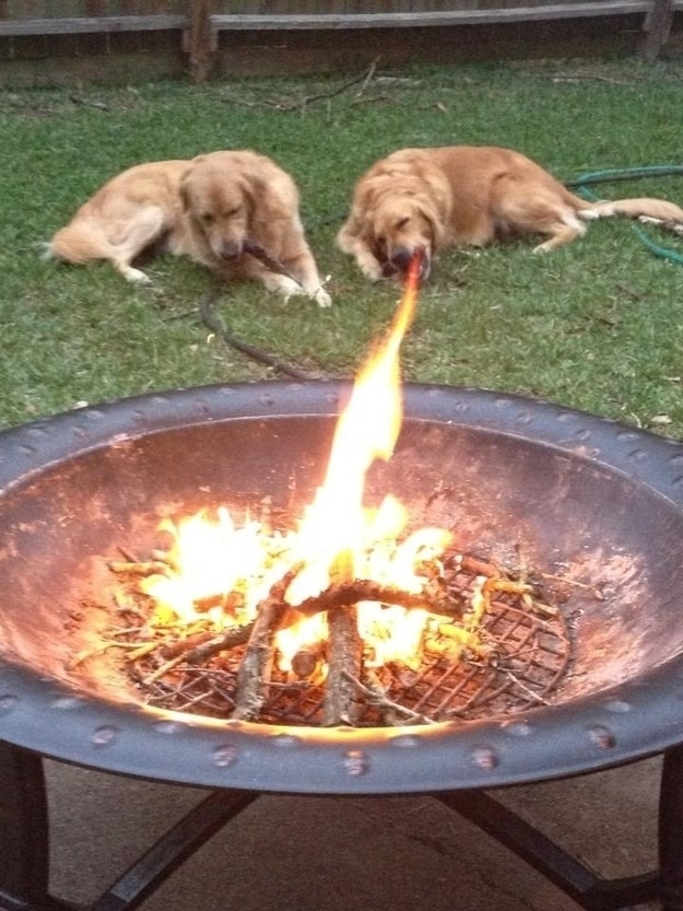 thespittingfiredog